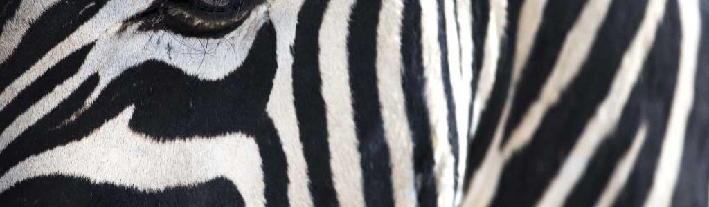 Sehnsucht Afrika Harscher 045